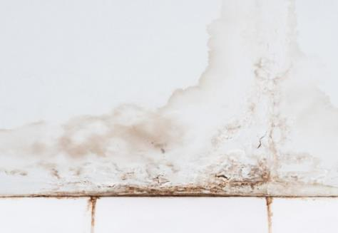 Mold Or Water Stains Signs That You Need A Dehumidifier